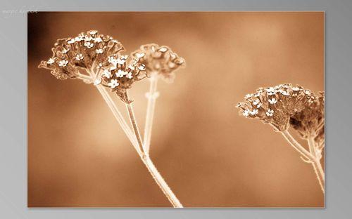 Sepia flower-1